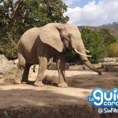 Parque Zoológico Caricuao