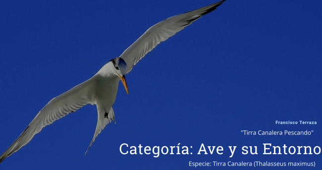 concurso-fotografico-aves-de-venezuela